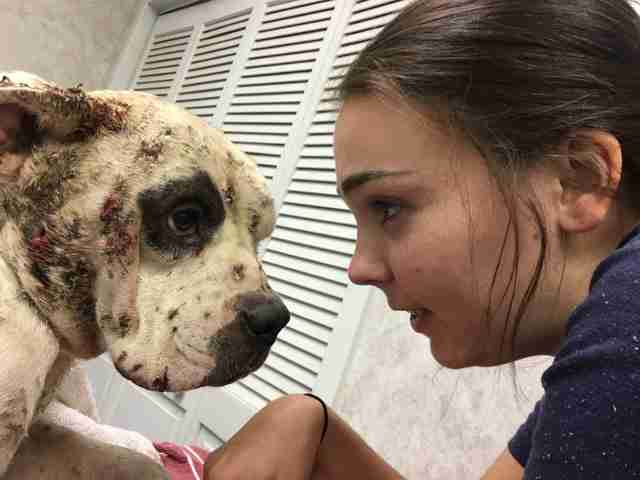 Woman with injured street dog