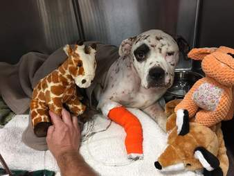 Rescue dog with stuffed toys