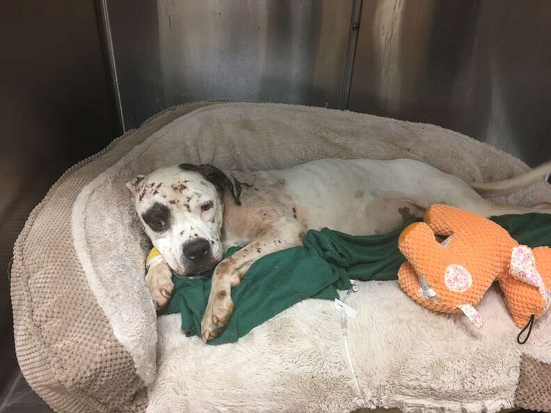 Rescue dog in dog bed