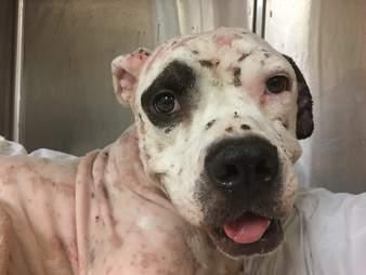 Rescue dog smiling