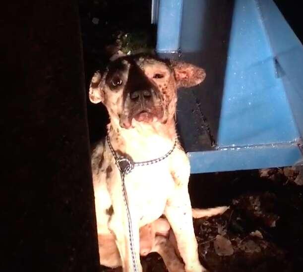 Injured dog behind dumpster