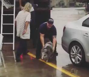 Pet pig rescued from hurricane