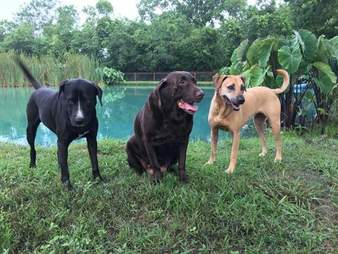Houston rescue dogs