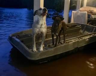 Hurricane Harvey rescue dogs
