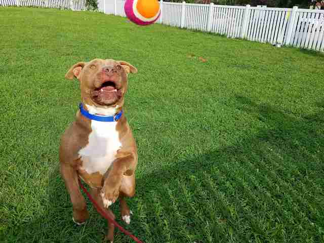 Dog enjoying tennis ball at shelter