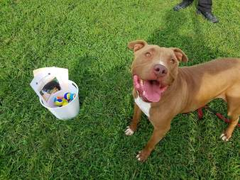 Tennis ball donation with shelter dog