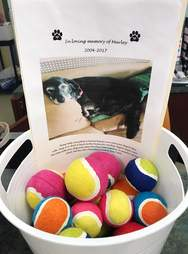 tennis ball donation to shelter in memory of beloved dog