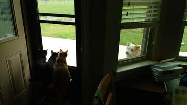 Foster cats watching dog