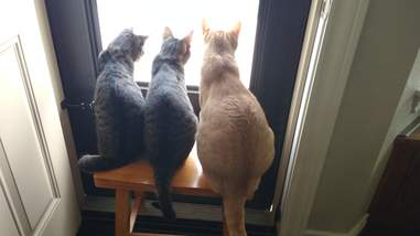 Bonded cats in foster home