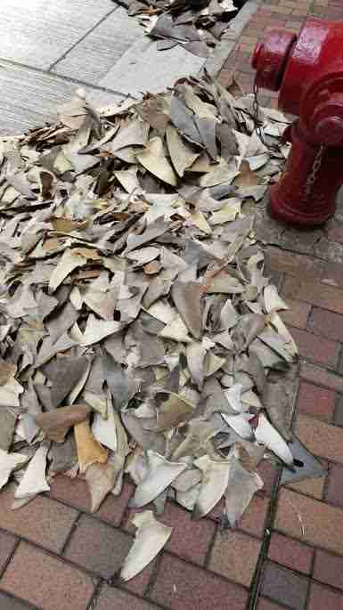 Shark fins in Hong Kong