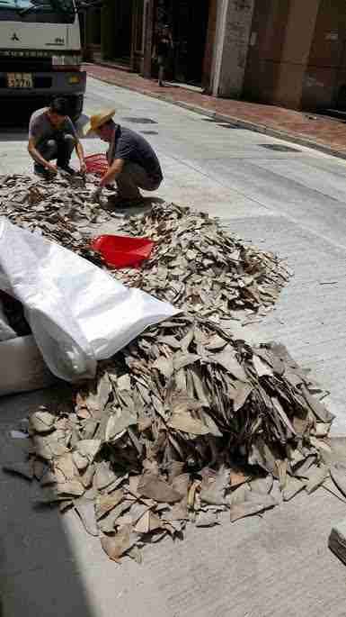 Shark fins on street in Hong Kong