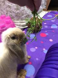 Rescued rabbit eating