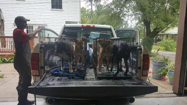 Rescued dogs loaded on truck