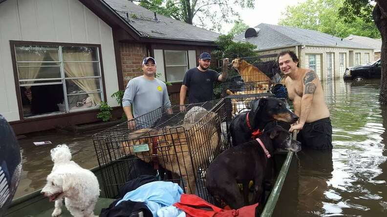 People helping save dogs in flood