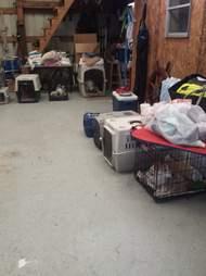 Rescued dogs inside barn