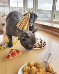 dog's first birthday party