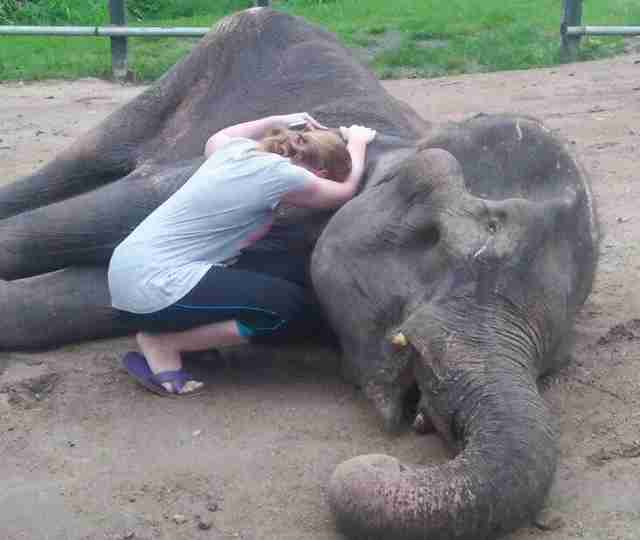 Elephant saved from trekking camp passes away