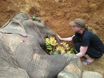 Rescuer mourns elephant she saved from trekking camp