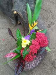 Elephant mourned with flowers at memorial