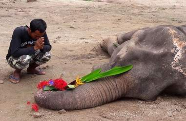 Elephant saved from trekking camp mourned at funeral