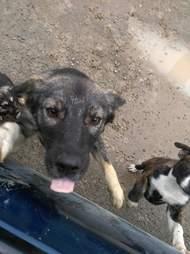Dogs stranded by wildfire getting fed
