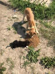 Dog and cat stranded by wildfire eating food brought to them