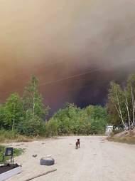 Dog near wildfire