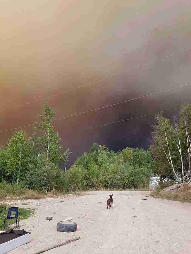 Dog near wildfire