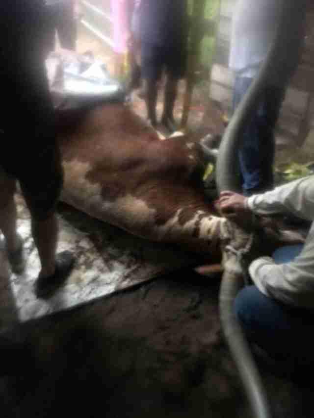 people helping steer stuck in mud