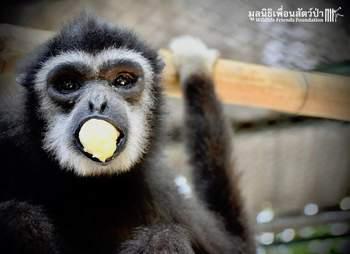 Rescued monkey