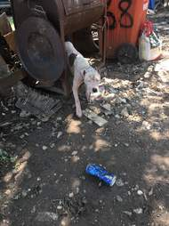 dog chained hurricane harvey