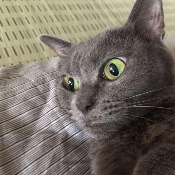 grumpy japan cat
