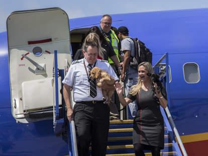 southwest airlines houston animal flight
