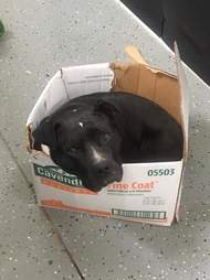 dog rescued insists on sleeping in cardboard box