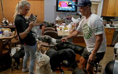 couple takes in 46 pets for hurricane irma