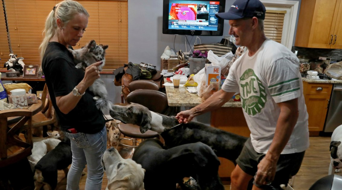 Couple Takes 46 Animals Into Their Home During Hurricane Irma