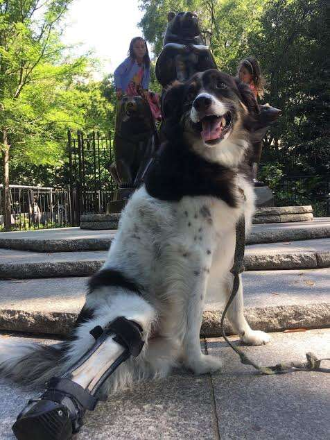 Special needs dog in Central Park