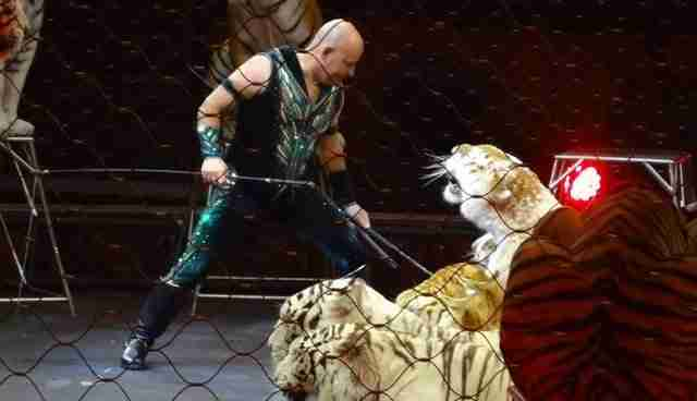 Trainer with circus tigers
