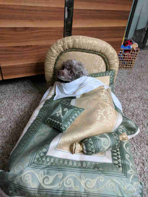 dogs use doll beds