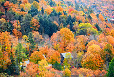 Share On Facebook Pin It Fall Foliage