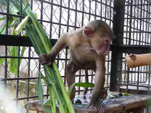 Baboon saved from smugglers