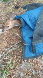 Deer saved from hurricane
