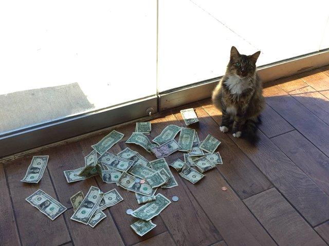 Cat Steals Money
