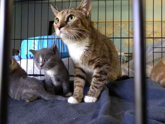 Cat family saved from abandoned house