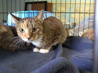 Cat mom saved from abandoned house
