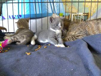Kittens saved from abandoned house
