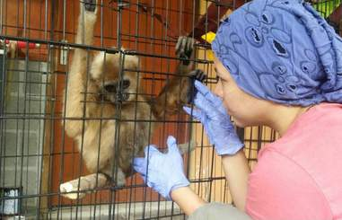 Woman with rescued gibbon in cage