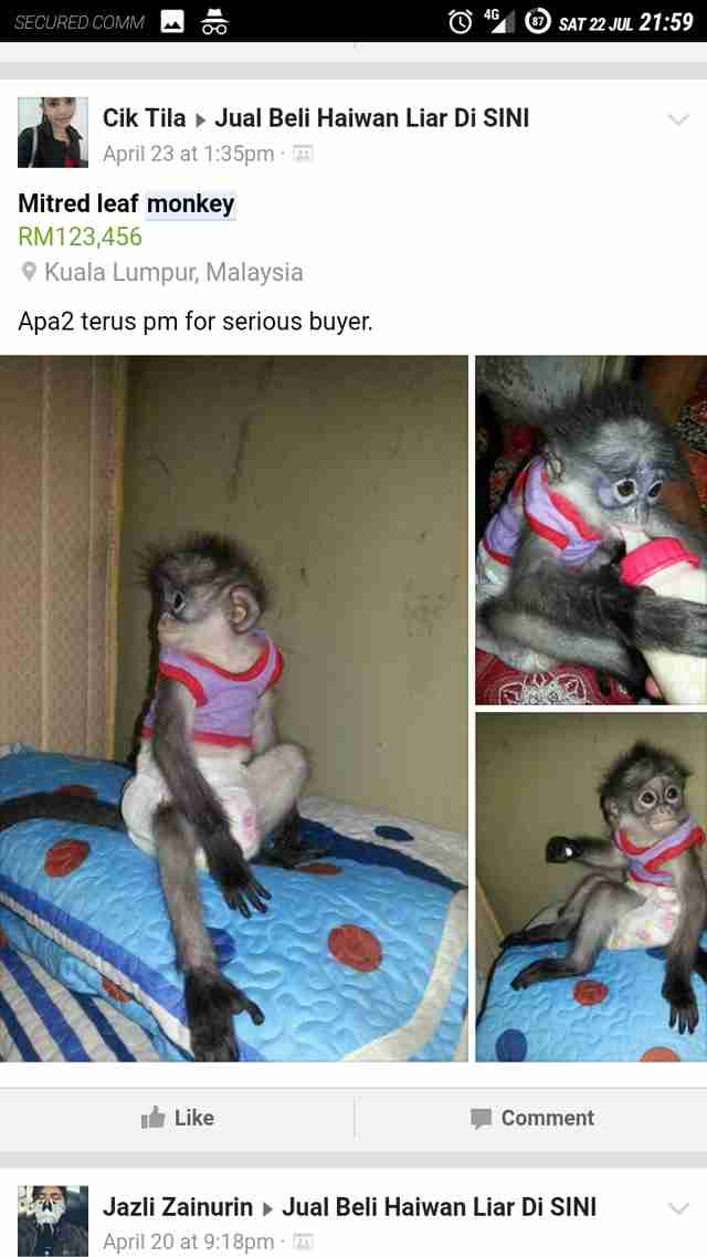 Baby gibbon for sale on Facebook