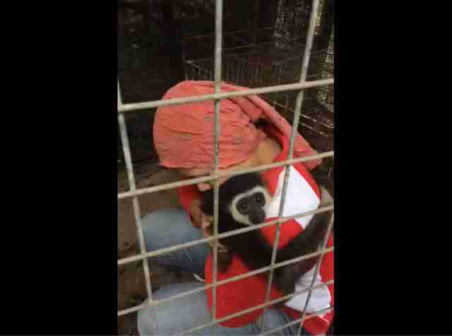 Woman holding rescued gibbon in cage