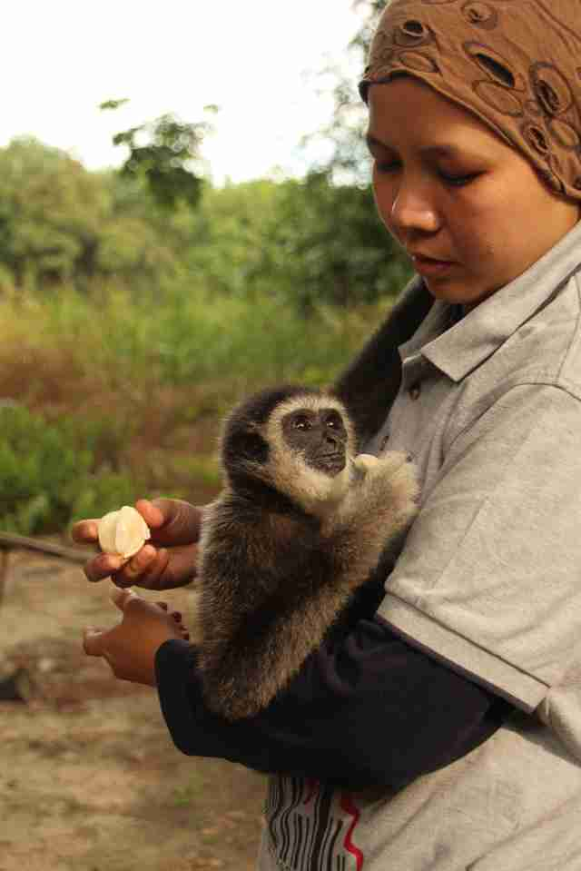 Woman holding rescued gibbon